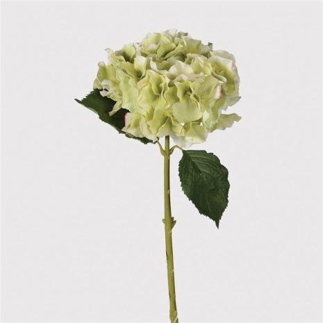 Pale Lime Hydrangea