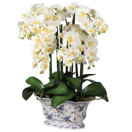 phalaenopsis orchid in a delft style pot