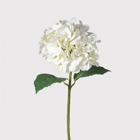 white soft hydrangea
